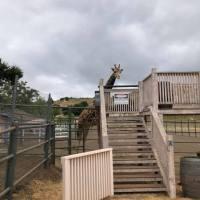 Striped Dress Under $35! (Bonus: Malibu Safari Pics)